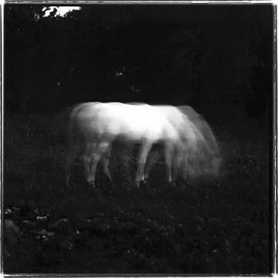 Keith Carter, WHITE HORSE IN MOONLIGHT Photography